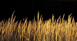 Herbe d'automne. photo libre de droits