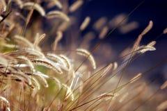 Herbe d'automne au coucher du soleil Photos stock