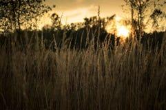 Herbe d'automne au coucher du soleil Photo libre de droits