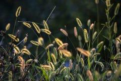 Herbe d'automne sur un pré dans Monténégro Photographie stock