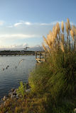 Herbe d'avoine de mer près de la voie d'eau Intracoastal au coucher du soleil Image stock