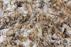 Herbe d'hiver Photo libre de droits