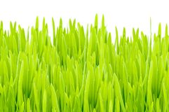 Herbe d'isolement Photographie stock