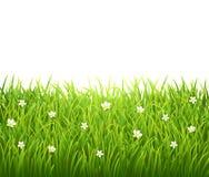 Herbe d'isolement par vert avec des fleurs sur le blanc illustration stock