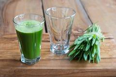 Herbe d'orge verte tirée dans un verre Photographie stock libre de droits