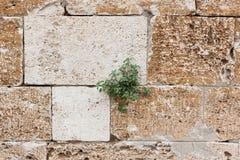 Herbe dans dans la fente de roche Photo libre de droits