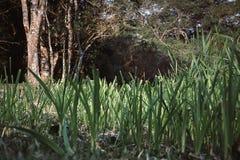 Herbe dans l'au sol de forêt photos stock