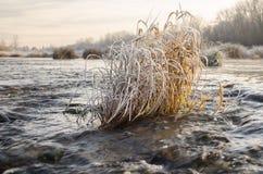 Herbe dans l'eau Image stock
