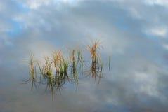 Herbe dans l'eau, ciel de réflexion Photographie stock libre de droits