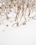 Herbe dans la neige image stock