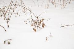 Herbe dans la neige photographie stock