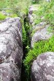 Herbe dans la roche cassant Phu Hin Rong Kla Phitsanulok Photo stock
