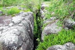 Herbe dans la roche cassant Phu Hin Rong Kla Phitsanulok Image stock