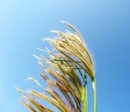 Herbe dans le ciel photographie stock libre de droits