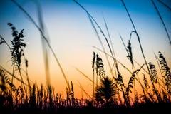 Herbe dans le coucher du soleil images libres de droits