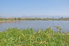 Herbe dans le lac Photographie stock libre de droits