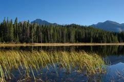 Herbe dans le lac colorado Images stock
