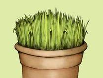 Herbe dans le pot de fleurs Image libre de droits