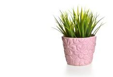 Herbe dans le pot rose sur un fond blanc Photos stock