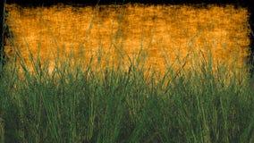 Herbe de blé avec le fond texturisé dans l'orange Photos libres de droits