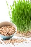 Herbe de blé et blé Images libres de droits