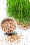 Herbe de blé et blé Photographie stock