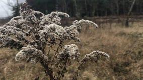 Herbe de bois mort sur un pré d'automne au milieu de la forêt banque de vidéos