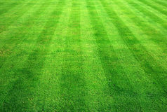 Herbe de Bowling Green. Photographie stock