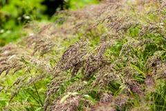 Herbe de champ après pluie d'été Photos stock