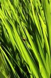 Herbe de champ avec le petit insecte photos stock