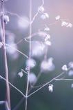 Herbe de champ en été Photo libre de droits