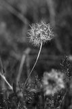 Herbe de champ en été Image stock
