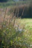 Herbe de champ en été Photographie stock libre de droits
