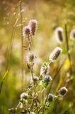 Herbe de champ en été Photos libres de droits