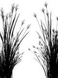 Herbe de champ sur un fond blanc d'isolement Images libres de droits