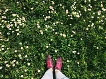 Herbe de chaussures de sport de femme au printemps Images stock