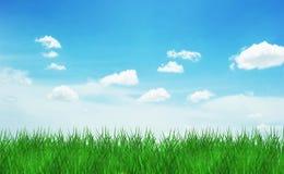 Herbe de ciel Photographie stock libre de droits