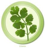 herbe de cilantro illustration de vecteur