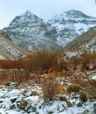 Herbe de colosse avec le fond de montagnes photo libre de droits