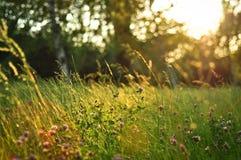 Herbe de coucher du soleil photographie stock