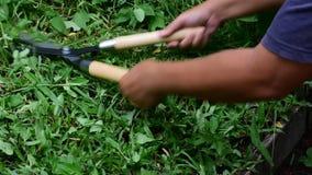 Herbe de coupe d'homme avec des ciseaux coupant l'herbe banque de vidéos