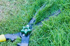 Herbe de coupe de ciseaux mise dans le jardin Image stock
