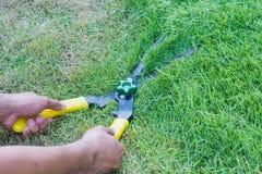 Herbe de coupe de ciseaux mise dans le jardin Photos libres de droits
