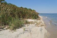 Herbe de dune de Seaoats Images stock
