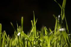 Quelques lames d'herbe Photo stock