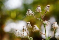 Herbe de fines herbes images stock