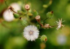 Herbe de fines herbes photographie stock libre de droits
