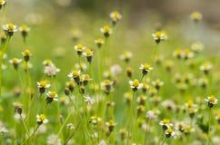 Herbe de fleur image stock