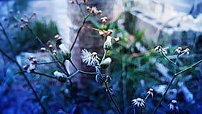Herbe de fleur Photos stock