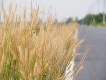Herbe de fleur le long de la route pendant l'été Il semble lumineux et beau Avec des couleurs douces Photographie stock